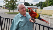 Joe Mumpower and his Scarlet Macaw are frequent entertainers at Starbucks.