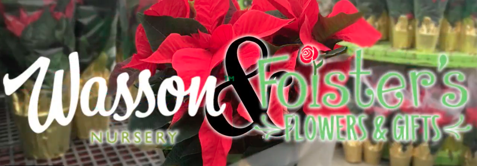 Watch Project Poinsettia Delivers 1 000 Poinsettias To