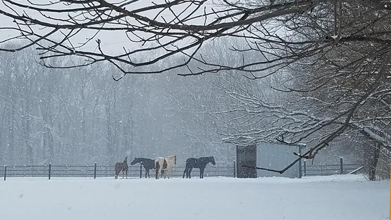 A chilly, peaceful scene in Delaware County. There is a barn close by and these animals are well cared for. Photo by: Dorothy Douglass, MutualBank