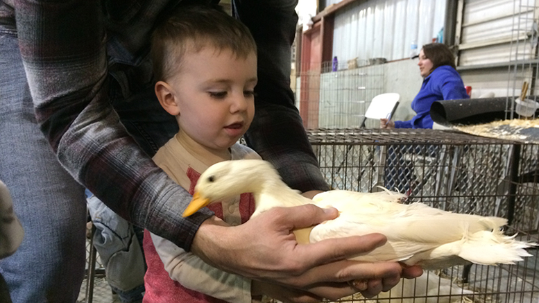 A youngster attending the farm festival meets a duck. Photo by: Nancy Carlson