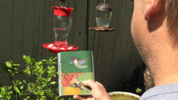 So far the only hummingbirds we've seen are in books. Photo by: Nancy Carlson