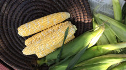 Enjoy corn-on-the-cob any way you want! Um, within reason. Photo by: Nancy Carlson